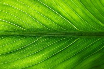 leaf-2210973_1920